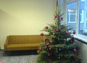 Tannenbaum in der Jura-Fakultät der Universität Rostock