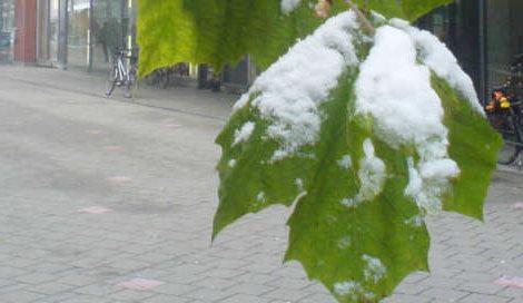 wintereinbruch, Blatt mit Schnee