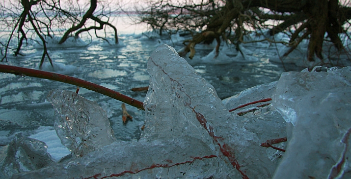 von Eis umhüllter Zweig