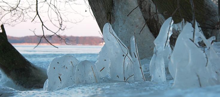 dürre Zweige unter dickem Eispanzer