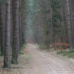 Einsamer Waldweg im Winter