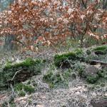 bemooster Waldboden