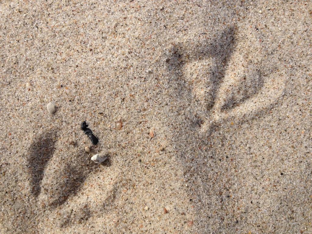 Sandabdruck von Möwenfüßen