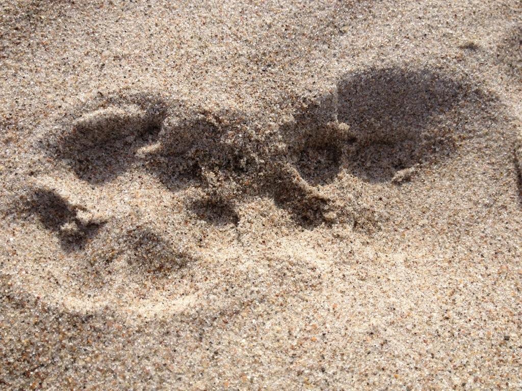 Sandbadruck einer Hundepfote