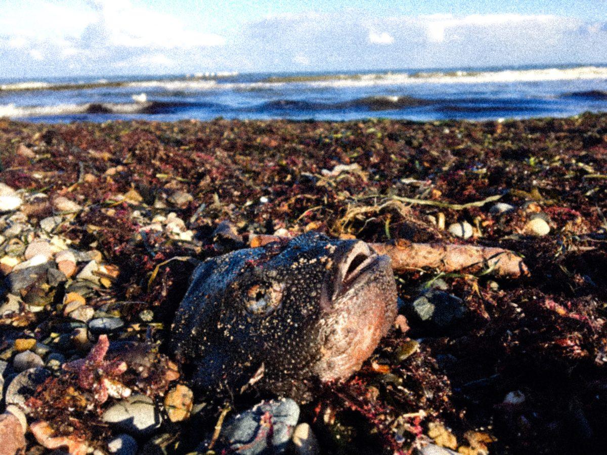 Boltenhagen: Leichenteile am Strand