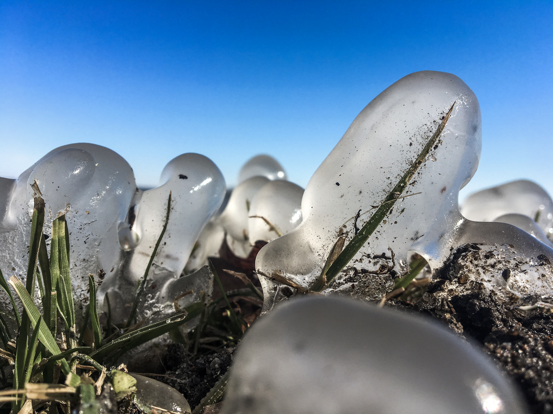 Von Eis umschlossener Grashalm vor blauem Himmel.