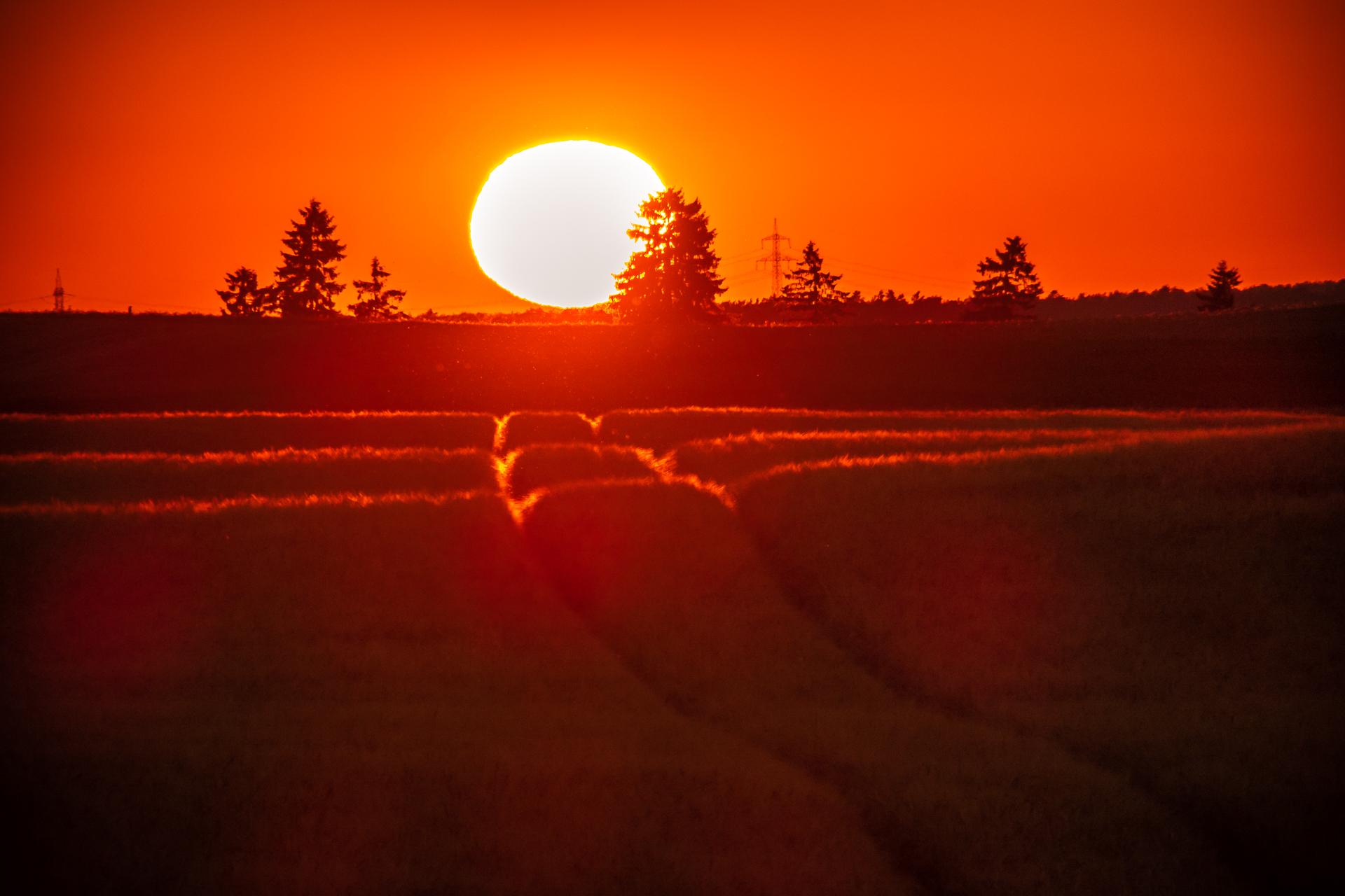 Treckerspuren in einem Getreidefeld, Sonnenuntergang, Gegenlicht