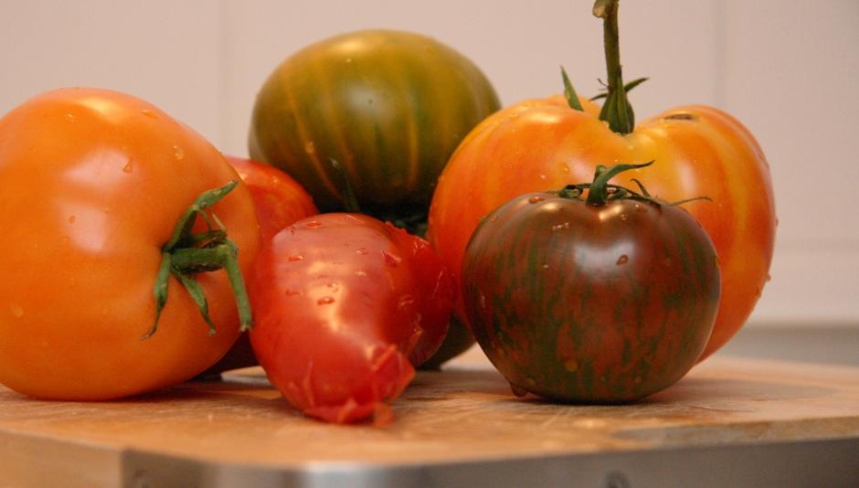 bunte_Tomaten.jpg